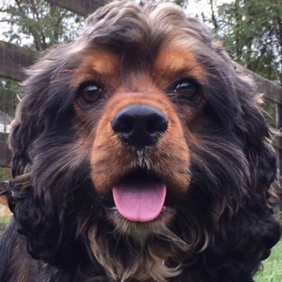 Should I Adopt A Dog With Ehrlichia